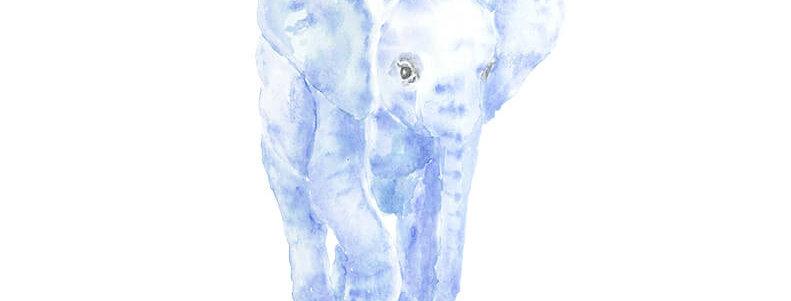 Acuarela elefante azul