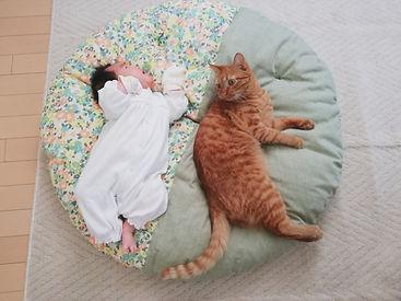 赤ちゃんもにゃんこも大好きなせんべい座布団!