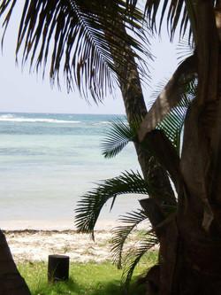 studio les 3 cocotiers sur la plage