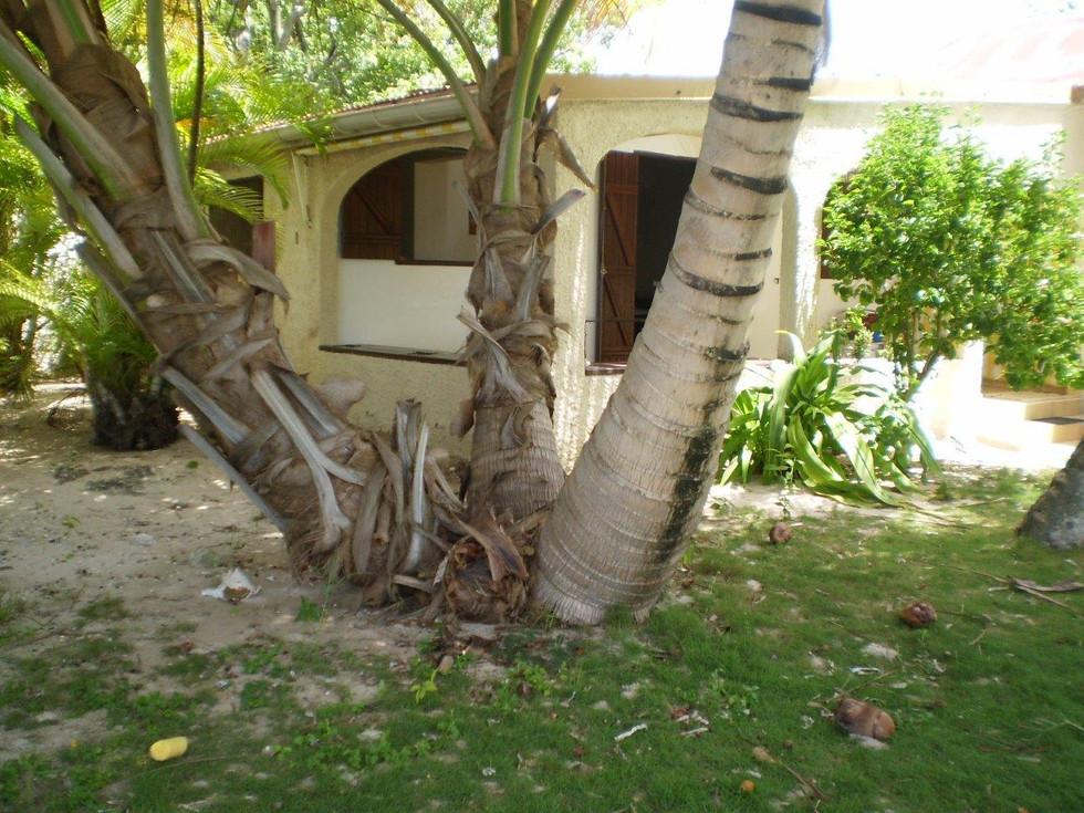 Les 3 cocotiers extèrieur jardin
