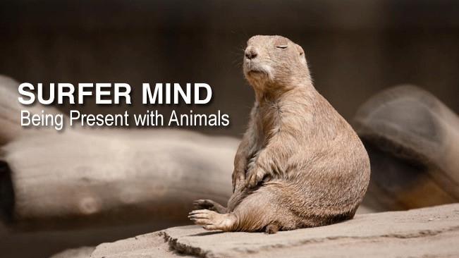 Surfer Mind: Being Present With Animals