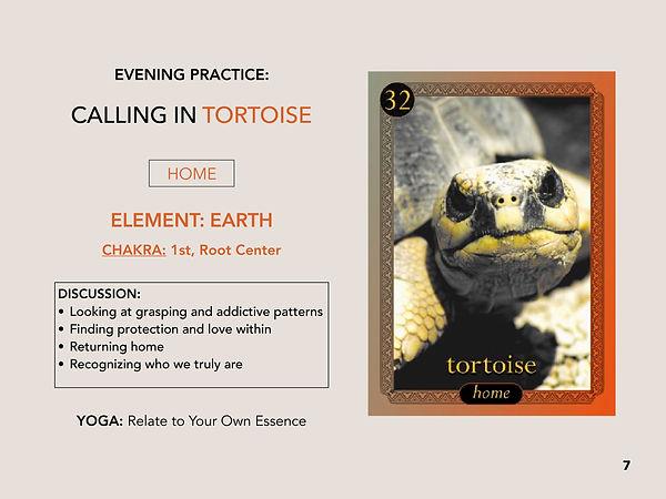 tortoise schedule.jpg