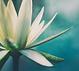 meditation-andy-blog.png
