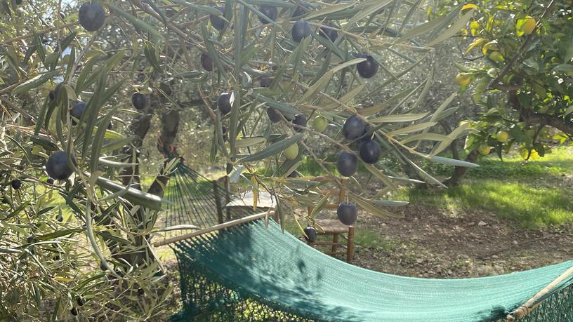 Hangmat in de boomgaard
