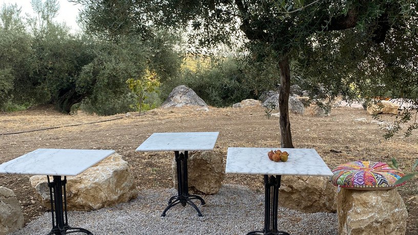Terras onder de olijfbomen
