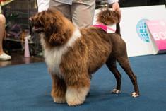 World dog show in Leipzig