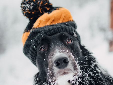How to Keep Your Dog Comfortable in the Winter