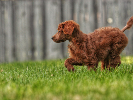 How to Prepare your Yard for a Dog