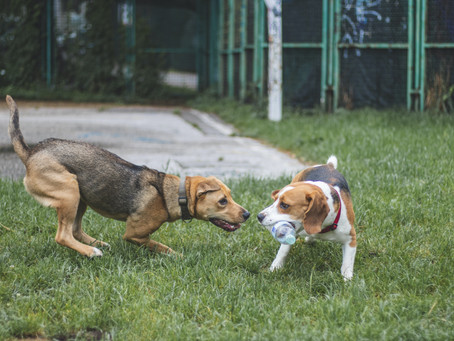 Dog Park Safety Tips in Maryland