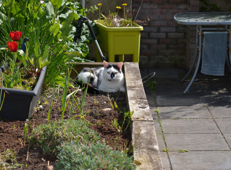 Plants that are Poisonous to Your Cat or Dog