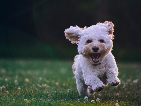 Right Fluff named One of Top 50 Pet Sitting Blogs of 2021