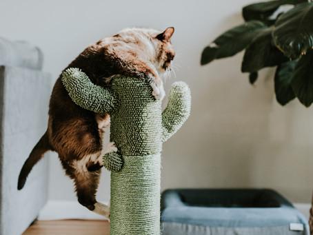 The Importance of Feline Enrichment