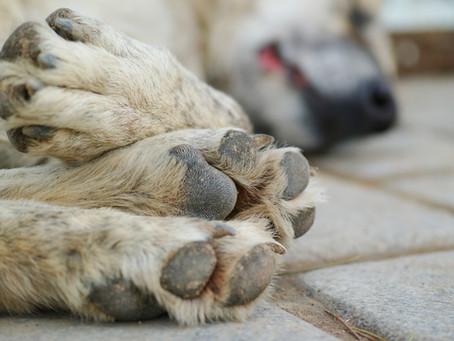 Pet Bereavement Resources