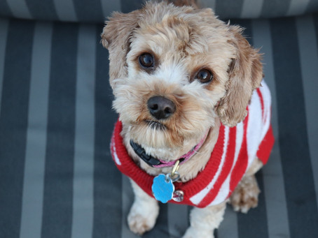 Fabulous Pet Stores on Etsy