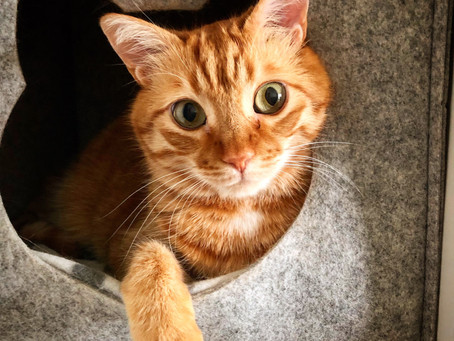 Tips for Safely Pilling a Cat