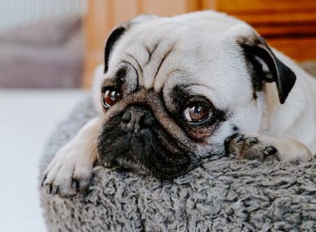 Separation Anxiety and Your Dog