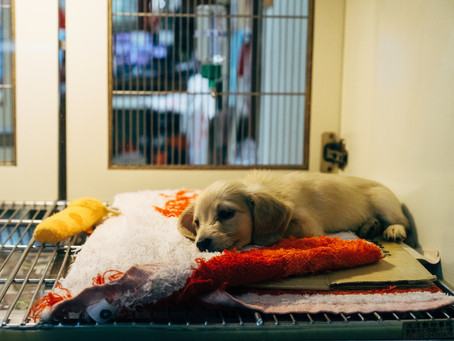5 Reasons Why Rescue Pets Are The Best