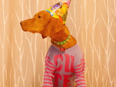 Best Pet Holidays to Celebrate