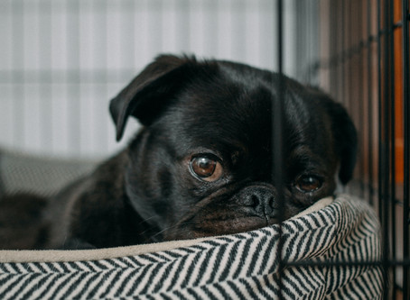 How to Tell if Your Pet Needs Some Space