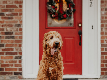 How to Find a Pet Sitter for the Holidays