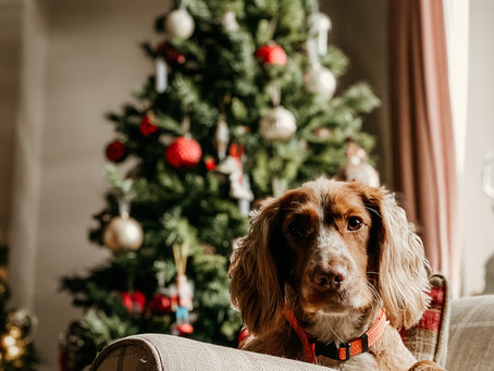 What's On Your Pet's Christmas List