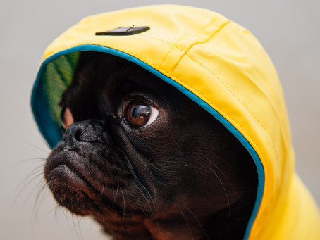 Rainy Day Dog Walking Tips