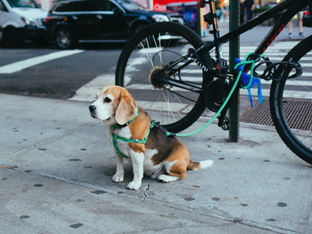 Preventing Dog Theft in Montgomery County Maryland