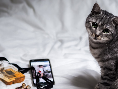 5 Great Apps for Cat Owners