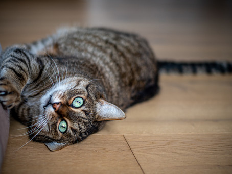 What Can You Do About Destructive Cat Scratching Behavior?