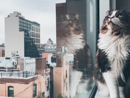 Tips for Renters who Want a Pet
