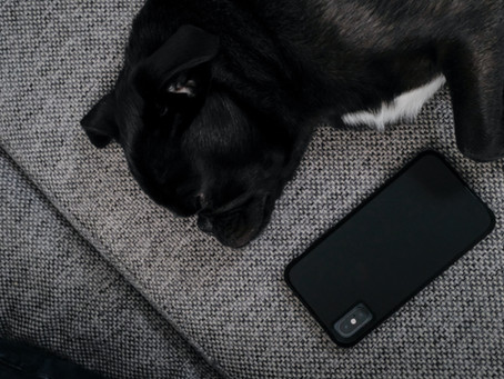 5 Great Apps for Dog Owners