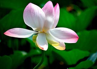 flower-5001171_1920.jpg