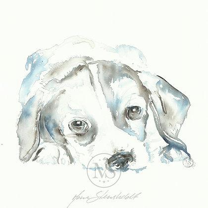 Hund - Valp