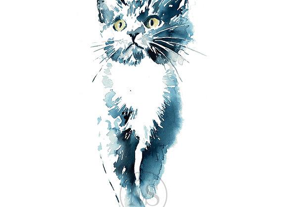 Katt - Pus