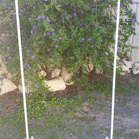 'Violet' frame $15