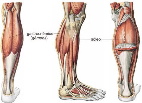 A contração da musculatura da panturilha é importante para o retorno venoso