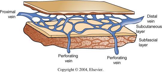 As veias superficiais se localizam logo abaixo da pele e ficam envoltas pela gordura do tecido subcutâneo