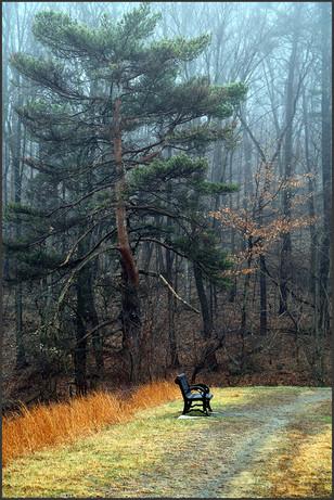 Invitation to Solitude