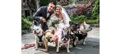 Wedding Banner Dogs 2