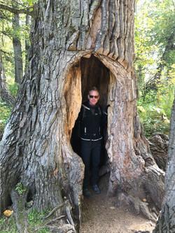 That's a big tree...