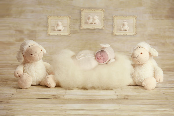Lamb Insertns.jpg