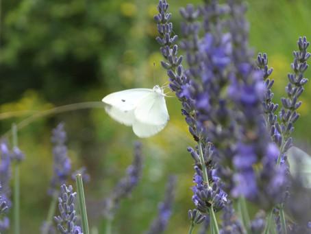 Tag der offenen Permakultur-Gartentüre im Kiental im Berner Oberland