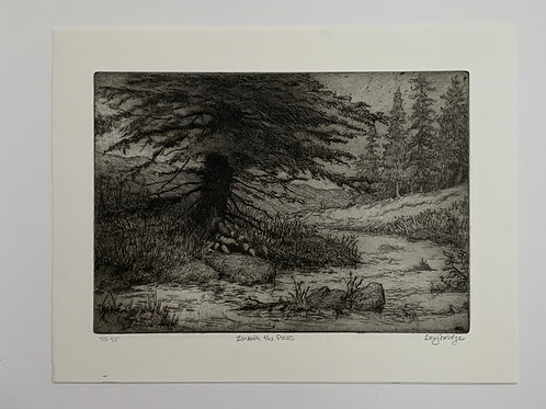 Beneath the Pines Etching by Stuart Loughridge