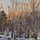 "Thumbnail: Diane Foster ""Morning Light"" Oil on Birch Panel Painting"