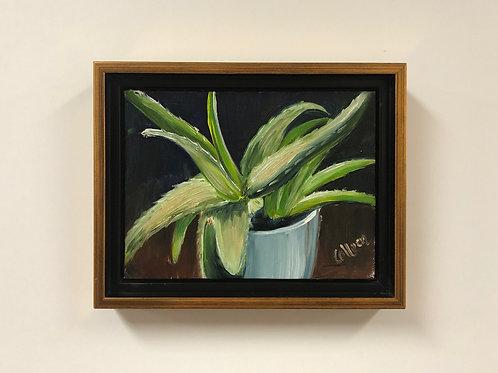 "Colleen Cosgrove ""Aloe Vera"" Oil Painting"