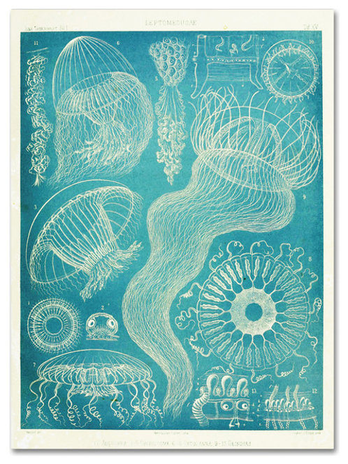 SOLD Jellyfish Sealife Poster