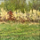 """Thumbnail: Hannah C. Heyer """"Wild Plum Blossoms in May"""" Oil Painting"""
