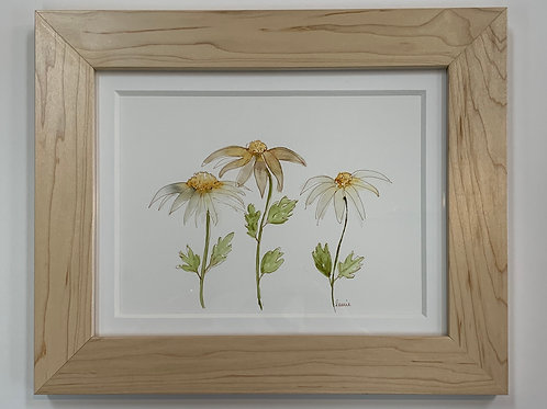 Daisies Watercolor by Laurie Plattes