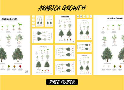Arabica Coffee Tree Growth Poster