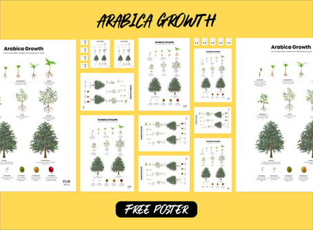 Arabica Coffee Tree Growth Poster